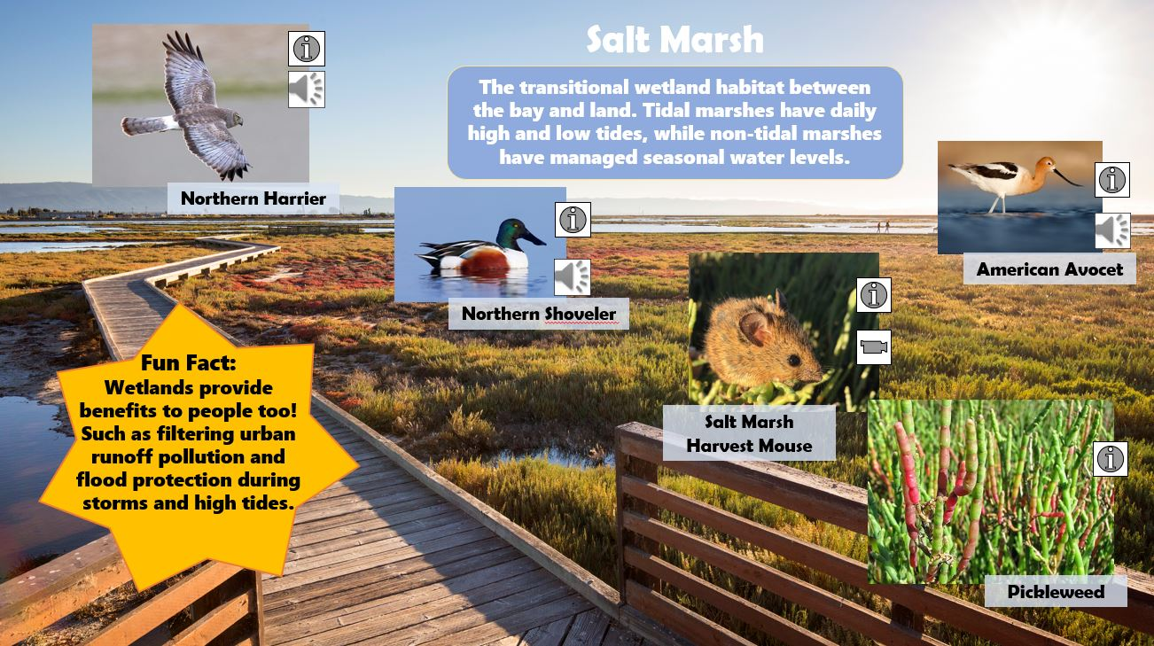 Explore and discover the 5 habitats of the Don Edwards San Francisco Bay National Wildlife Refuge