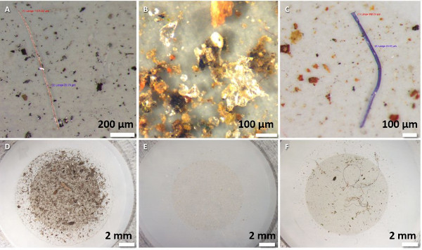 Samples of some of the microplastics researchers found in snow from the Arctic. Credit: Bergmann et al./Science Advances.